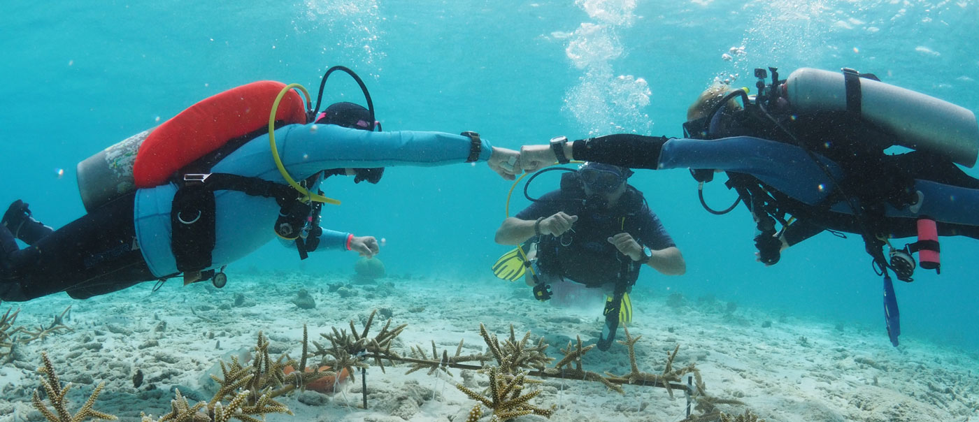 restore coral and reef bonaire