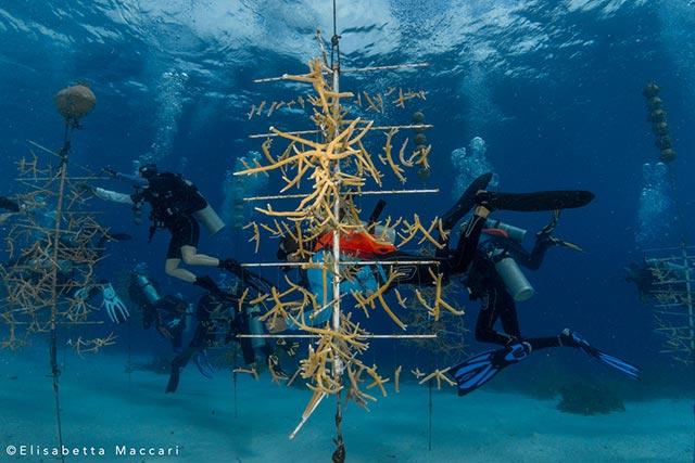 coral Maintenance and Monitoring