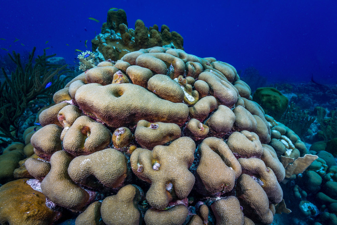 reef supporters