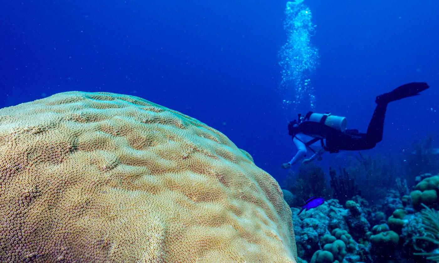 PADI Reef Renewal Diver Distinctive Specialty