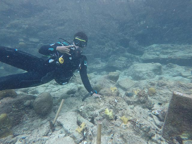 Jong Bonaire student outplanting elkhorn corals at Buddy's Reef