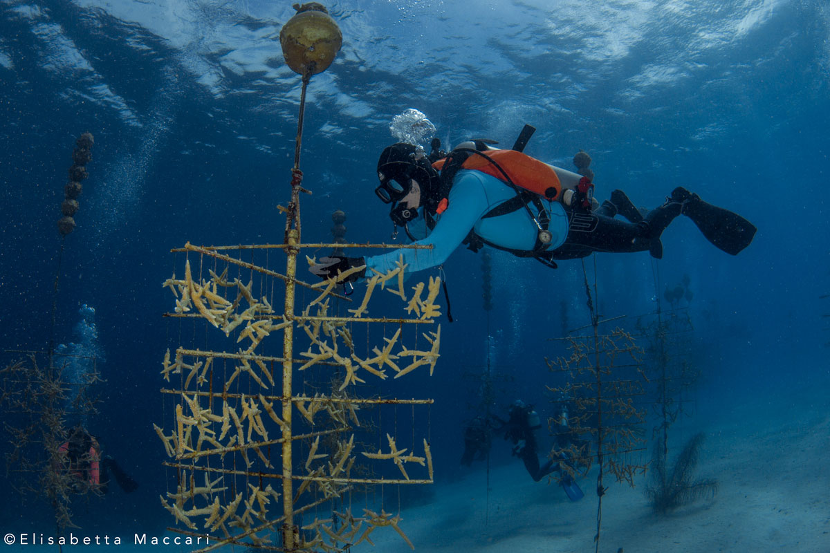 about reef renewal foundation bonaire