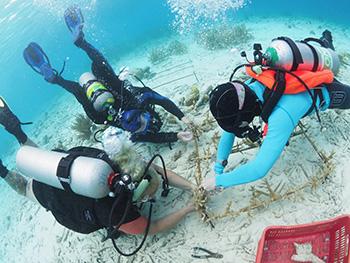 bonaire reef restore