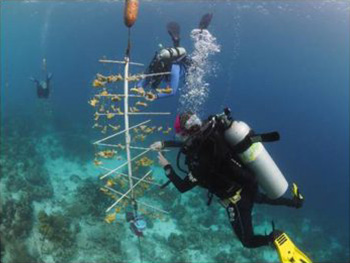 coral fixing bonaire