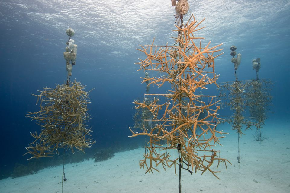 coral trees bonaire