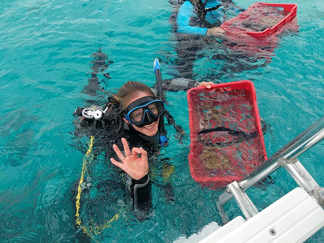 Beyond the Corals owner, Kim Kloet, carries the initial coral fragments to be placed in the Bachelor Beach nursery.