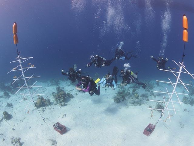 Divi Dive Bonaire in the coral nursery