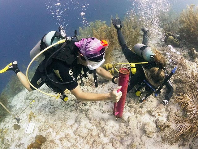 RRFB and Beyond the Corals staff installs the duckbill anchors at Bachelor's Beach.