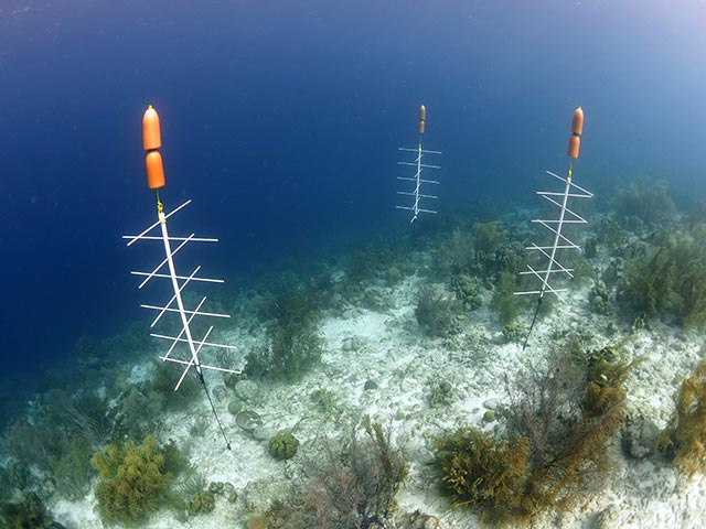 Three coral nursery trees hover above the reef at Bachelor's Beach.