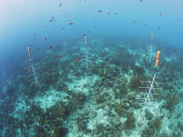 Ten coral nursery trees hover above the reef at the Punt Vierkant pop-up nursery.