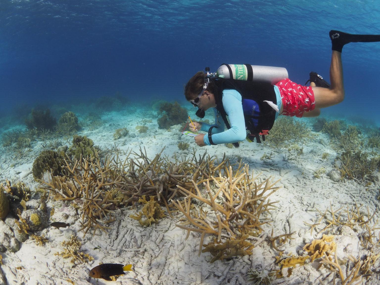 Sander counting marine life