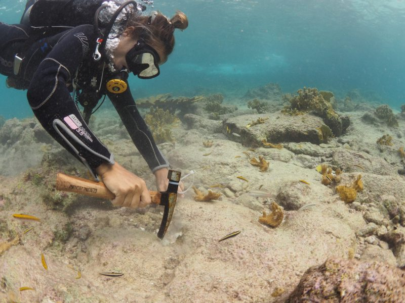 Over 750 Elkhorn Corals Planted at Oil Slick Leap