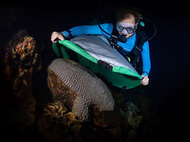 RRFB Assistant Coordinator, Garrett Fundakowski, places a collection net over a boulder brain coral.